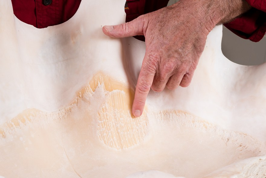 Details of the inside of a giant clam shell on Food Over 50