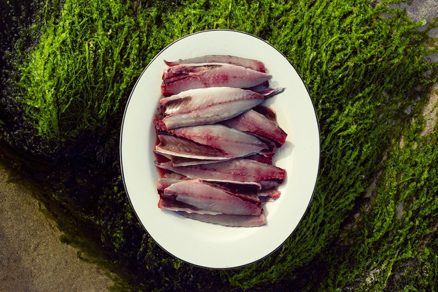 fresh caught mackerel fillets plated outdoors