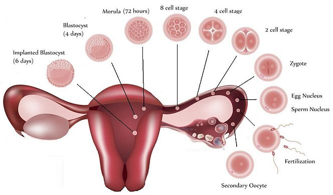 implantation bleeding signs and symptoms of spotting