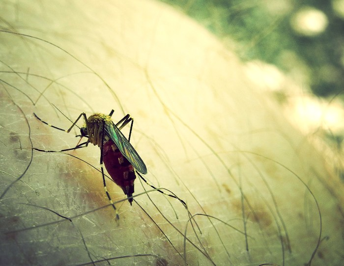 Does Drinking Alcohol Repel Mosquitoes? - Food Republic