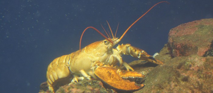 8 Tips For Buying Lobster (And What To Do Once You've Bought It)