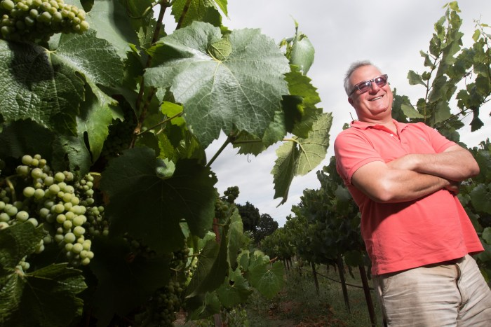 Winemaker Abe Schoener of The Scholium Project inspects one of the vineyards where he gets his wines in Napa, Calif. on July 10, 2015