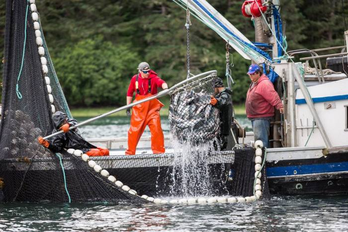 Everything You Need To Know About Wild Alaskan Salmon - Food