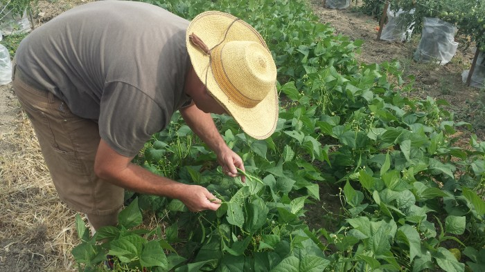 Eric Skokan working his farm in Boulder by Linnea Covington