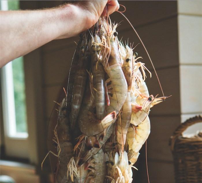 shrimp_embed