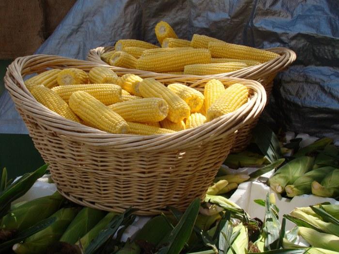 Sweet Corn by Brian Giesen