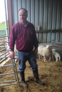 farmer in barn with sheep