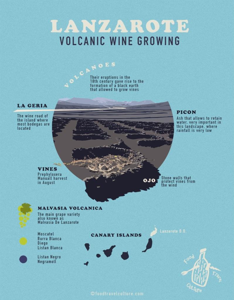 Lanzarote wine infographic