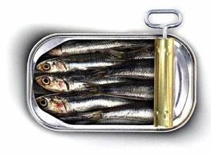 Image result for pics of sardines