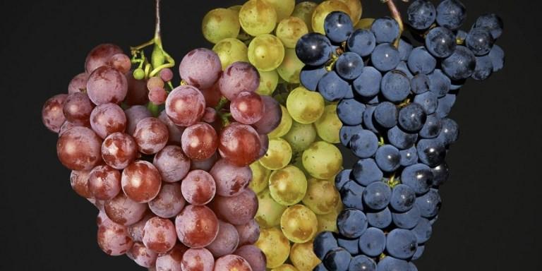 WINE/ BRUNELLO DI MONTALCINO, GIRO D'AFFARI DI 180 MILIONI E VOLANO DEL TURISMO DEL VINO