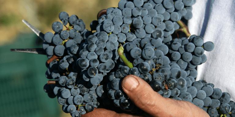 Wine Crossing Toscana-Umbria per le Anteprime termina a Montalcino col Brunello