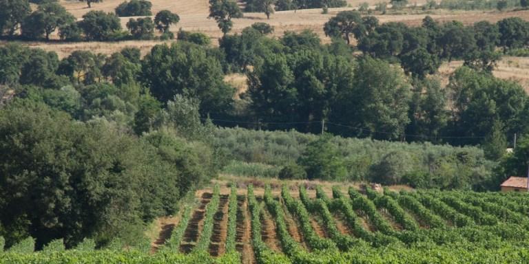 WINE/PROWEIN, SCHENK ITALIAN WINERIES PUNTA SUL BIOLOGICO