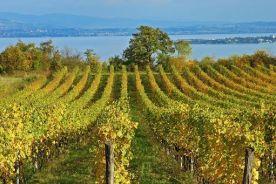"""Roma, 4 giu. (askanews) - """"Il Mercosur rappresenta una priorità per le aziende vinicole italiane, in particolare il Brasile, uno dei mercati cosiddetti """"emergenti"""" più dinamico e promettente in chiave di potenziale aumento di consumi pro capite di vino. In questa fase strategica dei negoziati UE–Mercosur riteniamo indispensabile che, mediante l'approvazione dell'accordo, l'Unione Europea risolva alcune questioni prioritarie per il settore del vitivinicolo, peraltro già rappresentate ai servizi della Commissione Europea dal Comité Vins, alla quale UIV aderisce. Chiediamo in particolare un'eliminazione completa dei dazi sul vino fin dall'entrata in vigore del trattato, dando priorità ai vini maggiormente esportati nei Paesi Mercosur, i vini imbottigliati e vini spumanti, che attualmente rappresentano oltre il 90%, in volume e in valore, dei vini importati dal Brasile. Dagli sviluppi degli ultimi cicli di negoziati abbiamo appreso che le proposte di concessioni in materia tariffaria per il settore del vino sono estremamente penalizzanti, in quanto il Mercosur propone un'eliminazione delle barriere tariffarie dopo 15 anni dall'entrata in vigore dell'accordo. Tale proposta è per noi inaccettabile, perché il vino italiano non trarrebbe alcun beneficio a breve e medio termine dalla conclusione dell'accordo e i vini argentini e cileni continuerebbero a rafforzare le loro quote di mercato in Brasile"""". In vista dell'imminente e decisivo ciclo di negoziati dell'accordo di libero scambio Unione Europea–Mercosur, che avrà luogo da oggi all'8 giugno 2018, Ernesto Abbona, presidente di Unione Italiana Vini, ha indirizzato una lettera ai Commissari Europei al Commercio Malmstrom e all'Agricoltura Hogan, al fine di reiterare alcune strategiche priorità per il settore vitivinicolo italiano. Oltre alla questione dei dazi, il Presidente UIV richiama l'attenzione dei negoziatori europei anche su un altro tema chiava: la protezione dei nomi delle indicazioni geografiche italiane, con una"""
