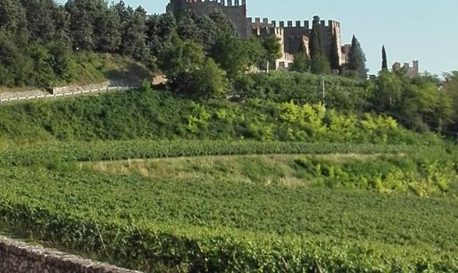 wine/ spumanti vero traino dell'export che frena la salita al 4,5%