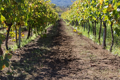 Vino/ L'enologo valdostano Curtaz diventa consulente di Firriato