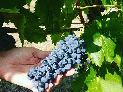 wine/ i volti del barbaresco una mostra a cuneo nel cuore delle langhe monferrato roero patrimonio dell'unesco