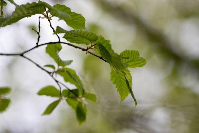 feuilles