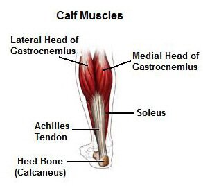 medial lower leg muscles diagram gfs true coil wiring calf stretches improve flexibility how do the work
