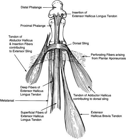 Surgical Advancements: Arthroscopic Alternatives to Open