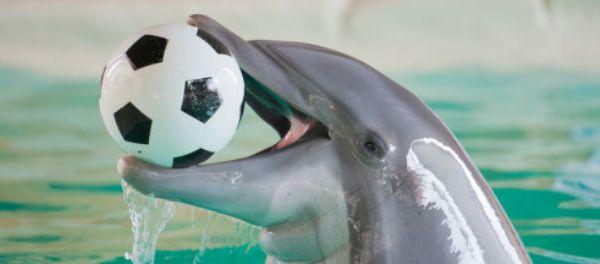 FootballFrance-Winter-dauphin