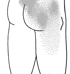 drawing  [ 1700 x 3600 Pixel ]