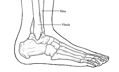 skin assessment diagram 1998 jeep grand cherokee car stereo wiring ankle fractures - foot health facts