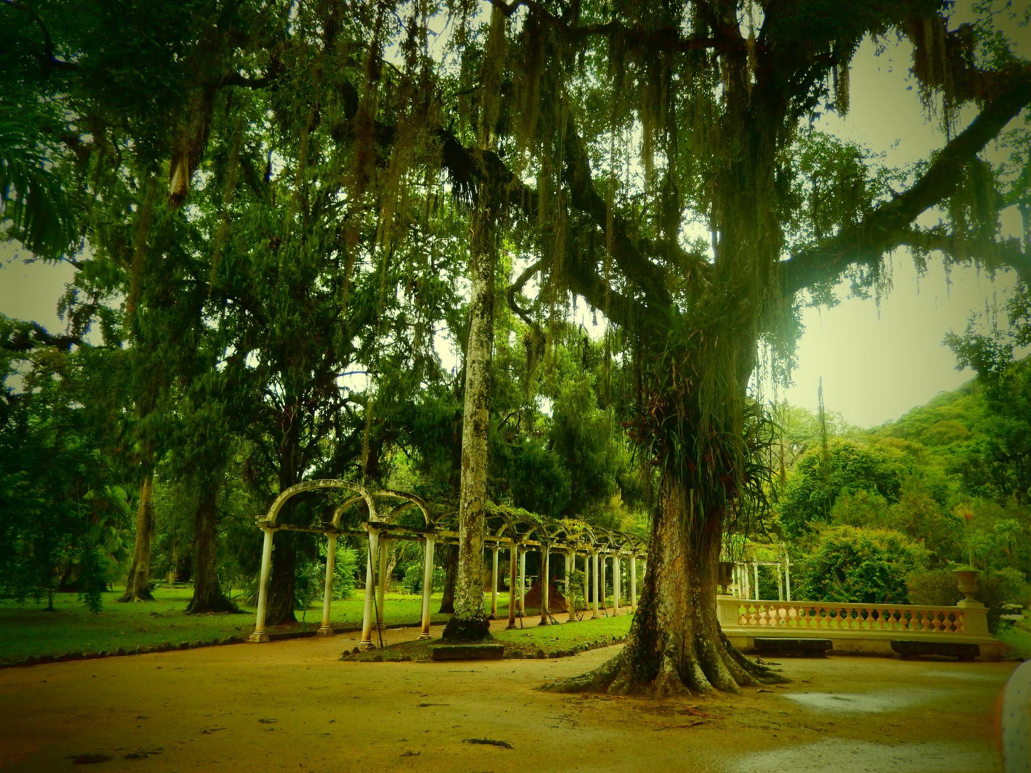 Trees in Jardim Botanico in Rio de Janeiro