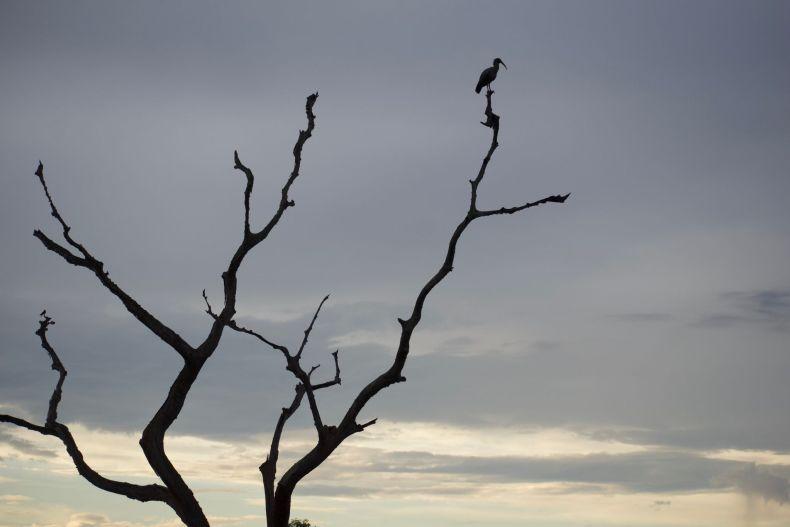 Bird on a tree branch in sertão