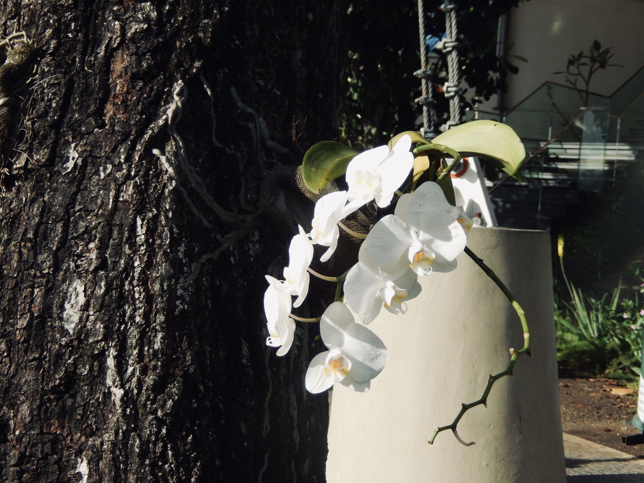 Orchid on tree in Rio de Janeiro
