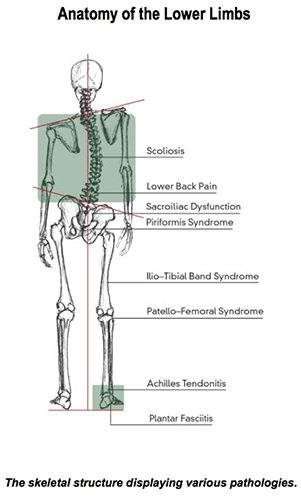 bones in your foot diagram emergency light wiring maintained the feet and lower limbs footmaxx