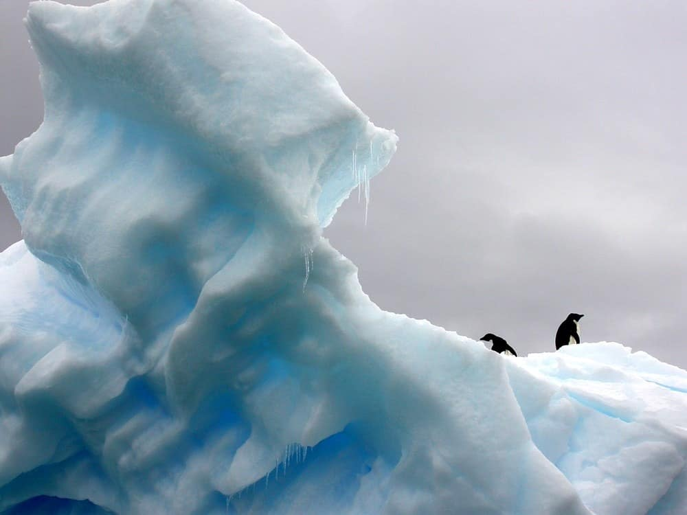 penguins on thin ice
