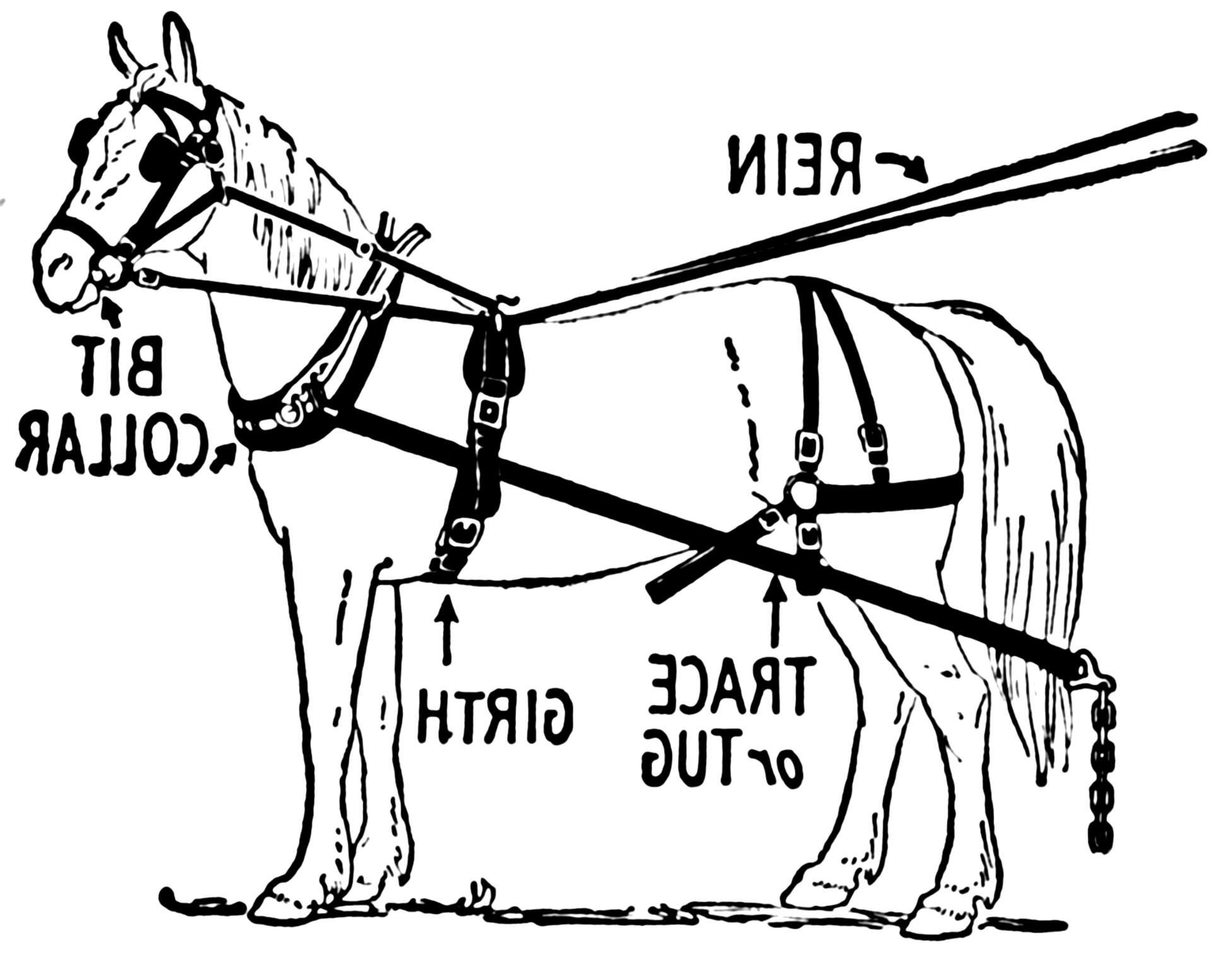 Horse Hames For Sale In Uk