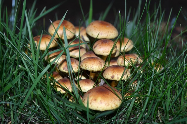 The Secret Life of A Mushroom