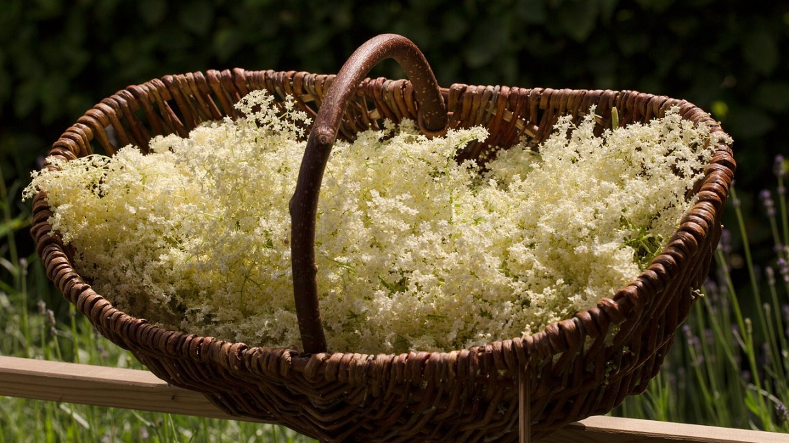 Elderflower Champagne – In 5 Easy Steps!