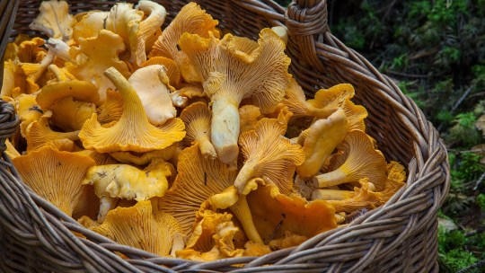 Foraging Fun: Why You Need To Get Involved