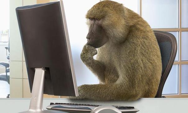 monkey67