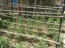 Estructura tomateras 2