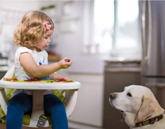 dog high chair children s lounge baby highchair 578x454 force of nature 578 454