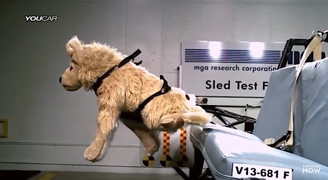 Dog Crash Test