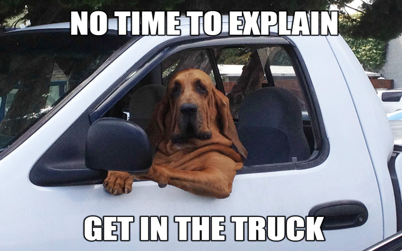funny-dog-driving