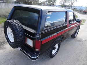 Free Wheelin' Bronco