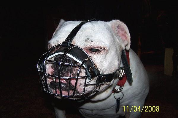 Bulldog Wire Diagram