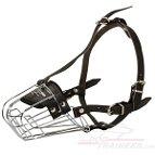 Amstaff : Dog harness , Dog collar , Dog leash , Dog