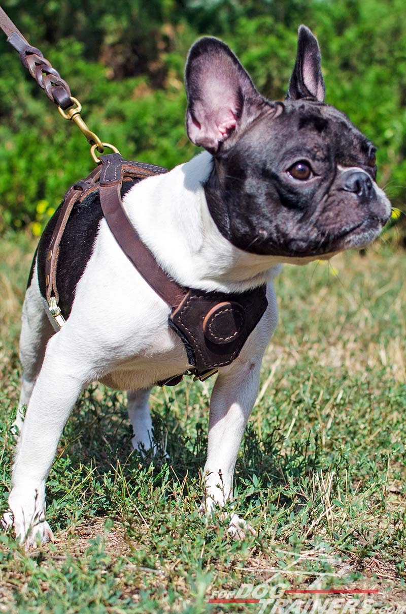 Buy Leather Dog Puppy Harness Small Breed Dog Harness