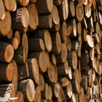 Timber Sale Services
