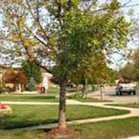 Municipal Tree Management Services
