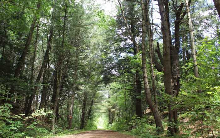 Nature's Alternative Investment – Part 2