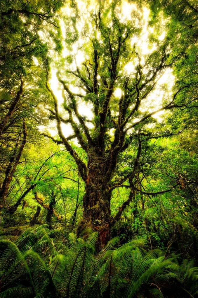New Zealand Photo Adventure with Trey Ratcliff | Travel