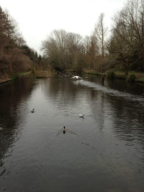 River_Wandle2