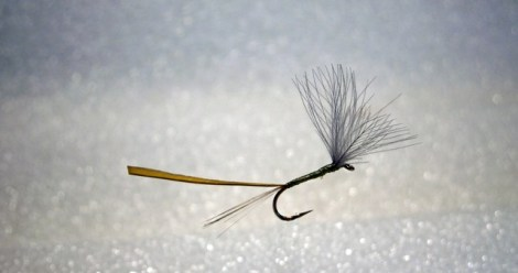 Forelle Äsche Fliegenbinden Blue Winged Olive BWO 4